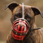 Gefahr-Hunde
